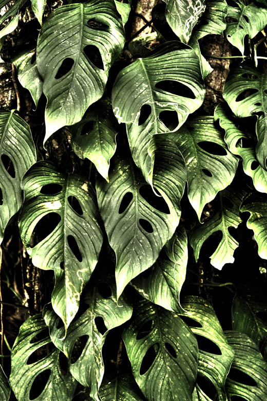 jungle leaves in Jaco hotel